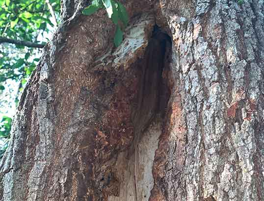 Tree risk assessment