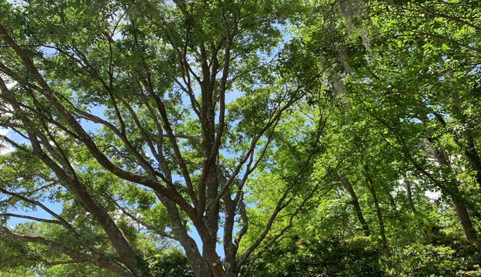 summer months for the health of the tree