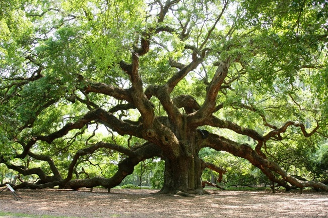 Trees Communicate With Each Other