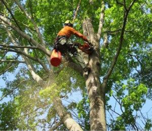 tree trimming mt pleasant sc