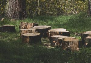 tree trimming charleston sc